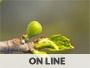 Corso on line erboristeria e gemmoterapia secondo livello