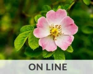 Corso fiori di Bach on line